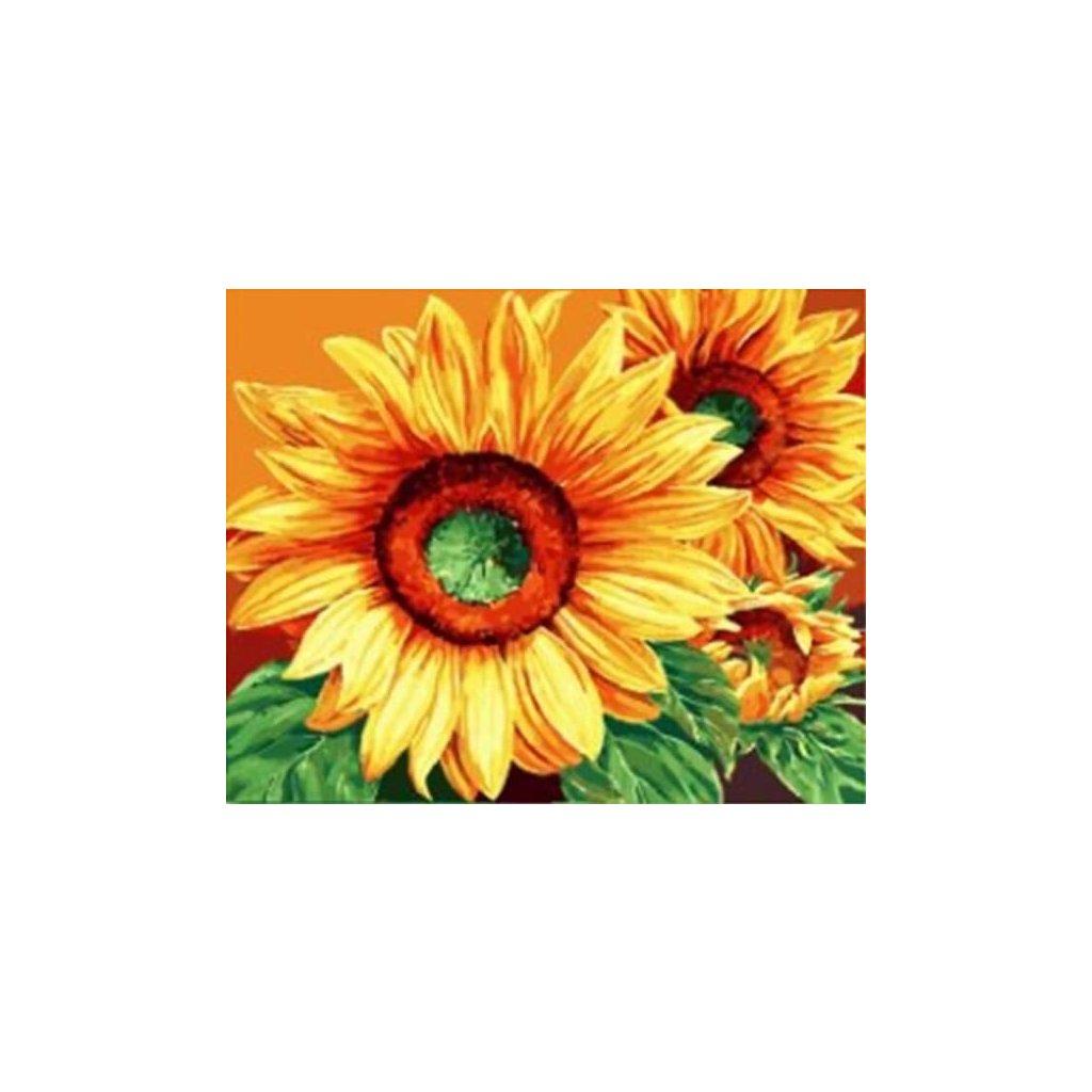 """Malování podle čísel s rámem """"Slunečnice 2"""" 50x40cm"""