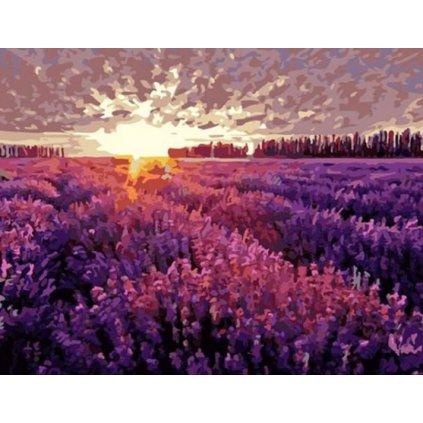 Levanduľové pole