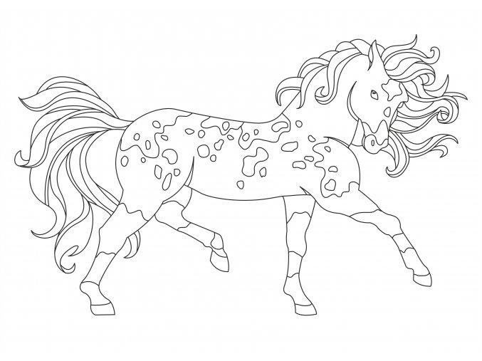 Šablona Kůň