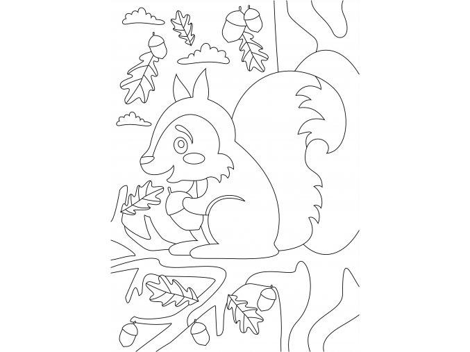 Šablona Veverka na stromě