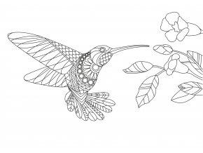 Šablona Kolibřík