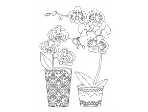 Šablona Orchidej