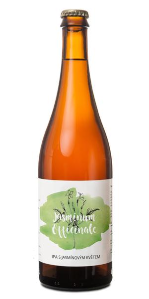 Pivovar-pivecka-Jasminum-officinale-nahled