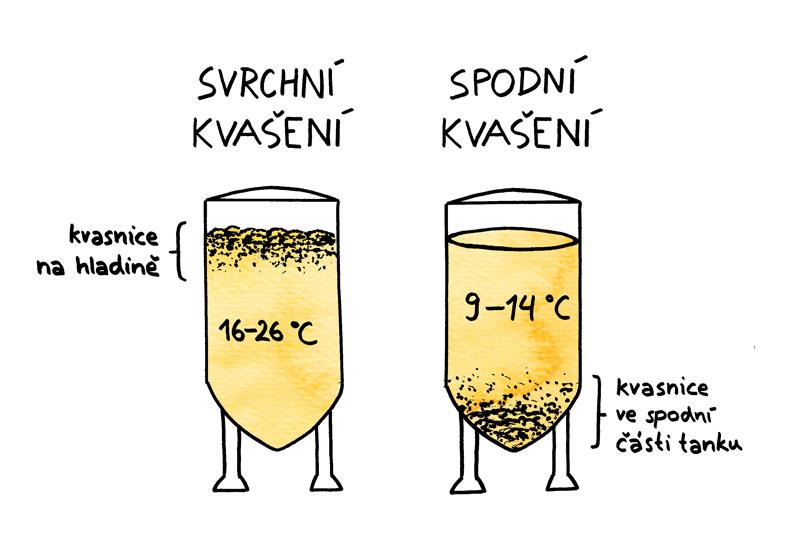 pivovar-pivecka-Svrchní-kvašení