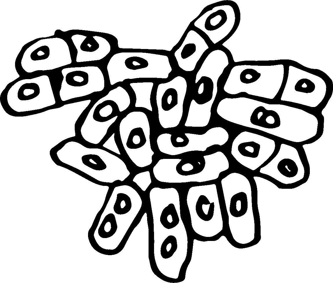 kvasinkyfinal