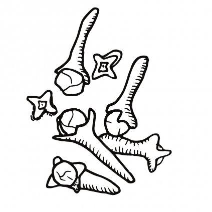 hřebíček
