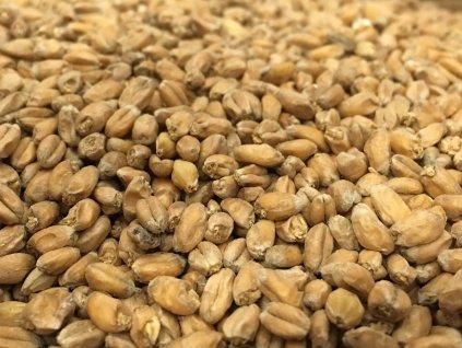 Weyermann® Pšeničný světlý slad, Pale Wheat Malt