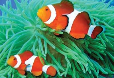 akváriá a terária