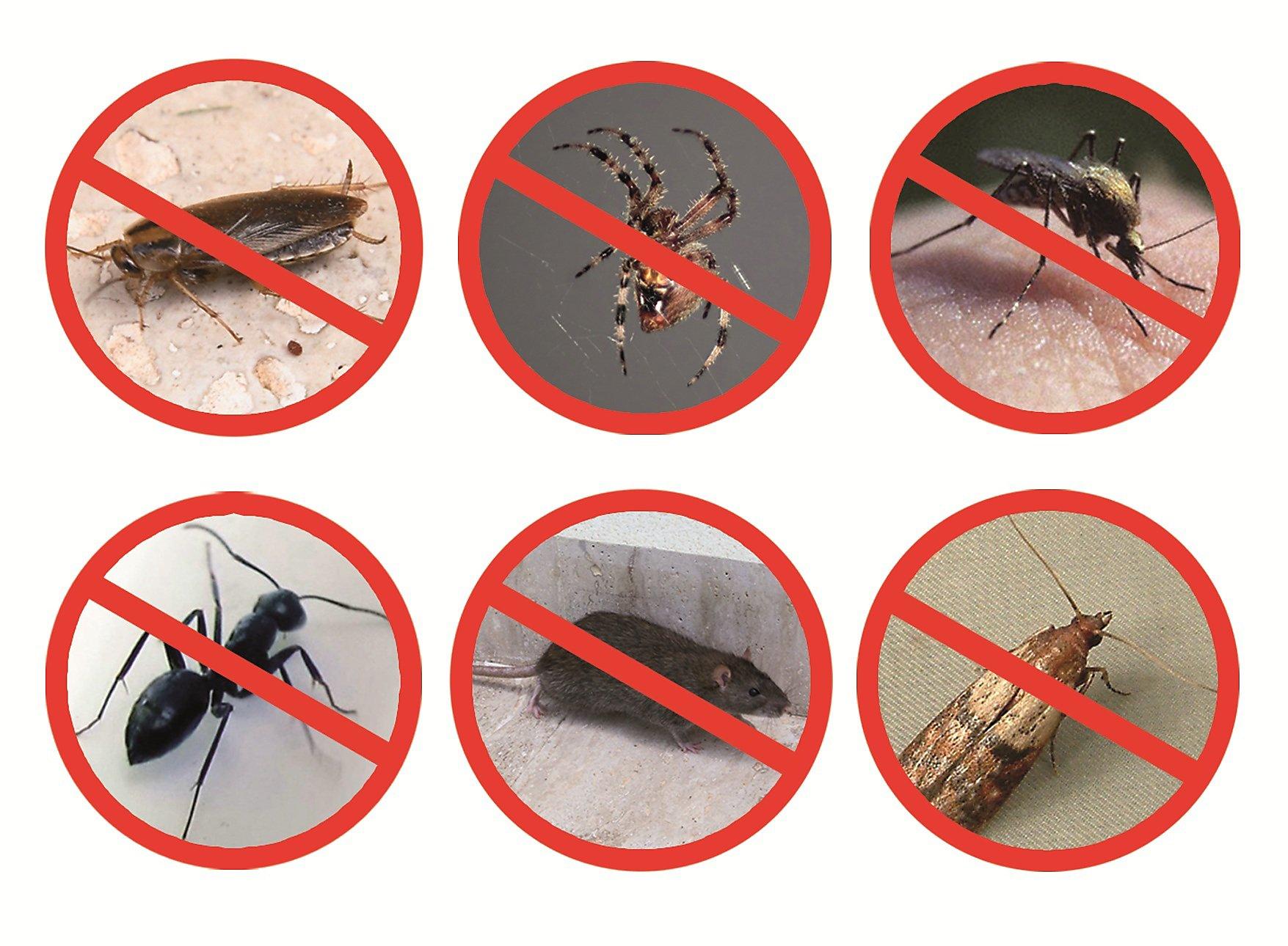 schaedlingsvertreiber-pest-reject-pro-242404488