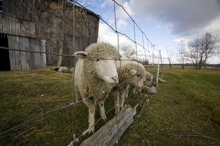 Vybíráme pletivo pro chovatele: jak zvolit to nejvhodnější?