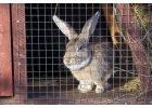 Králičí pletivo, pletivo na klece pro králíky