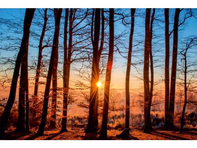 Medzi stromami