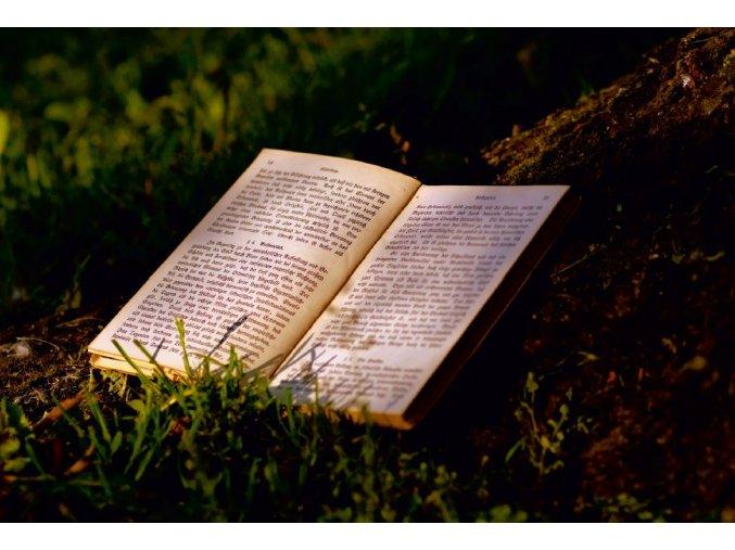 Kniha pri strome