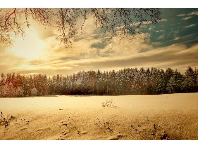 Zasnežená krajina, les