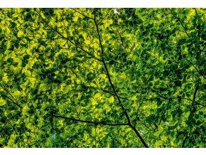 Zelené lístie