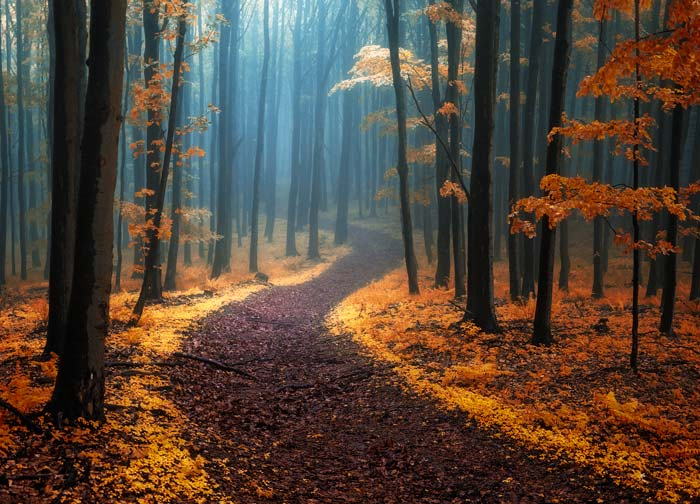 Fotograf Janek Sedlář a jeho úžasné pohlednice lesů