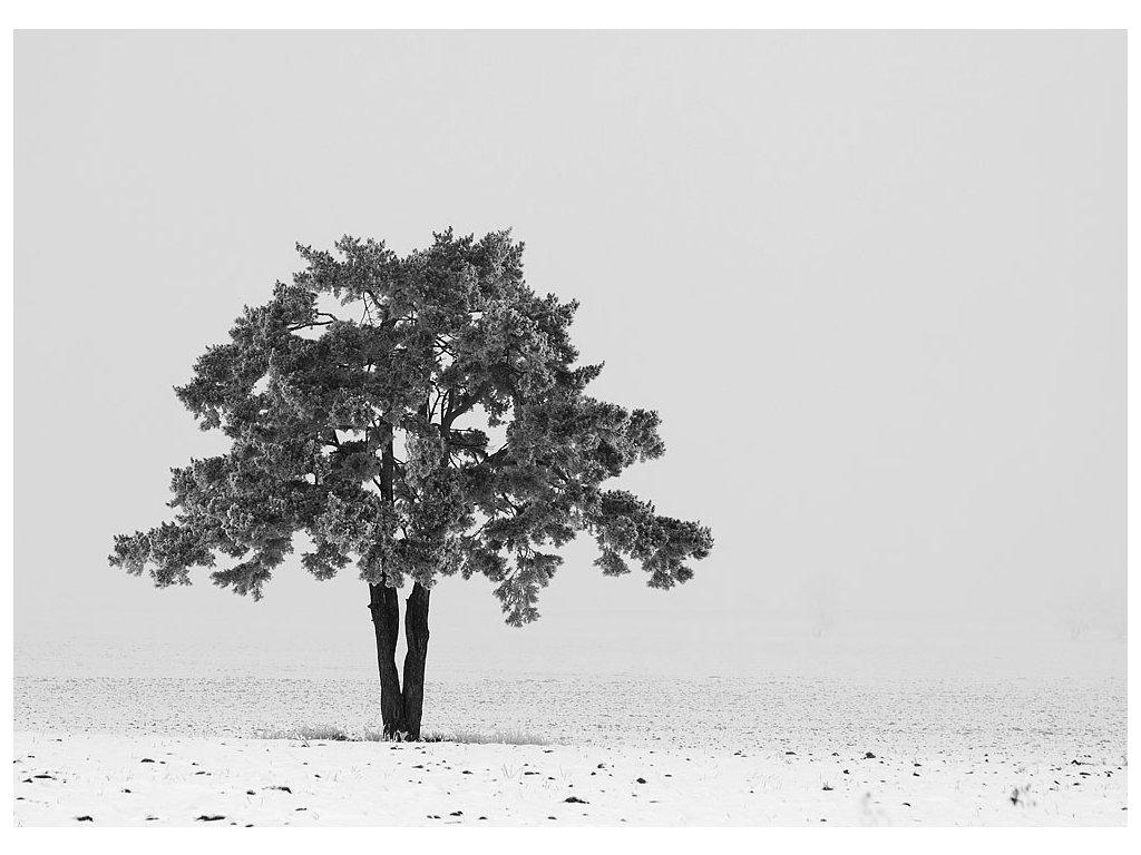 Pohlednice Strom
