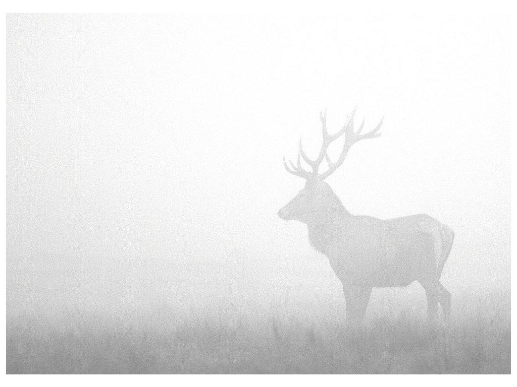 Pohlednice Jelen v mlze
