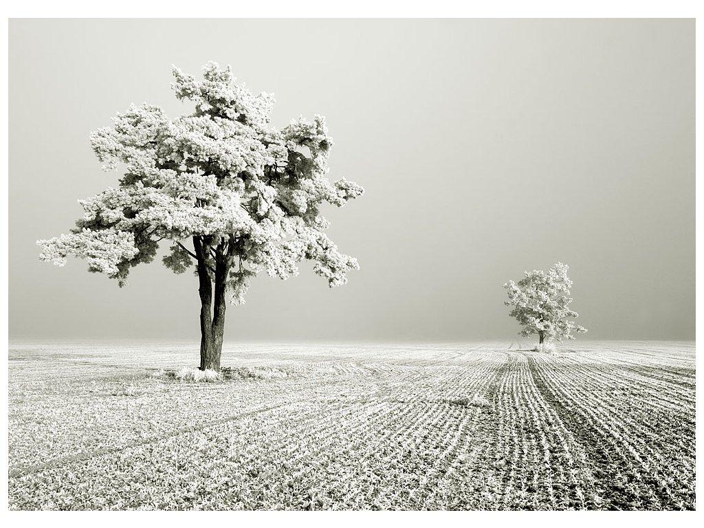 Pohlednice Zima