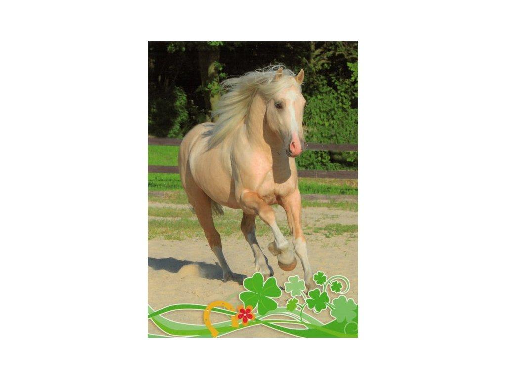 Pohlednice Kůň 57