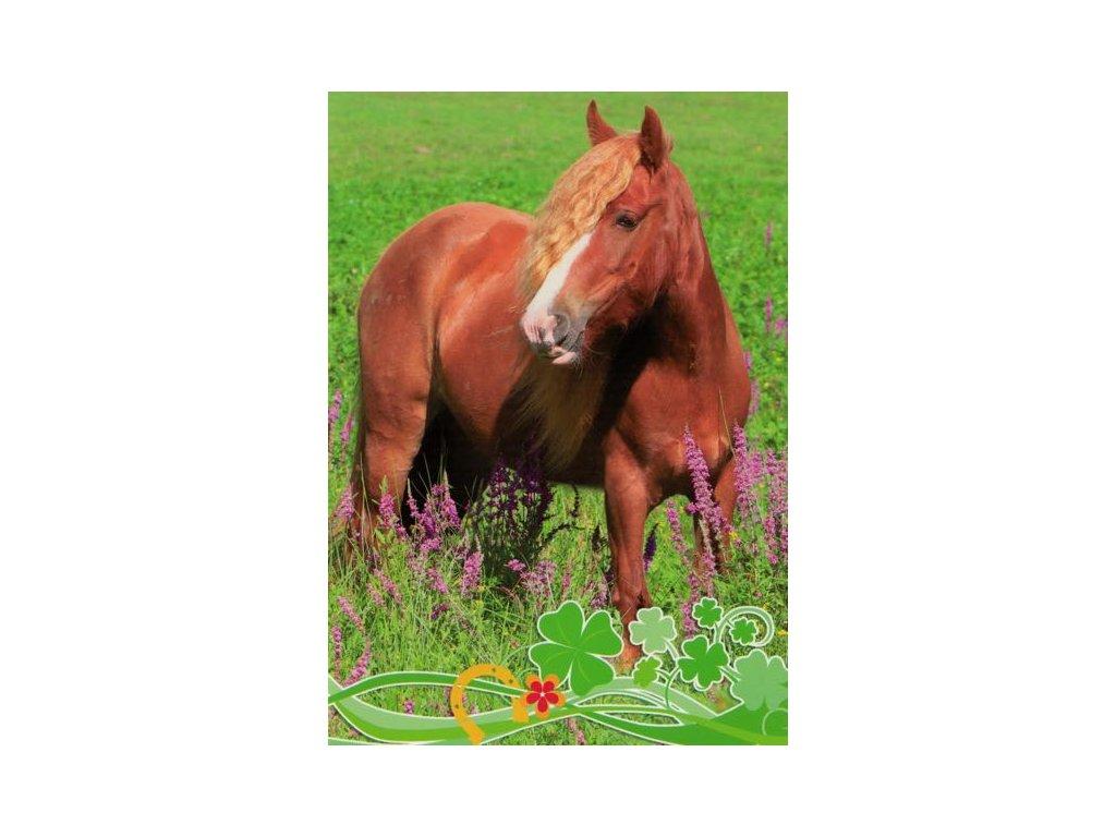 Pohlednice Kůň 59