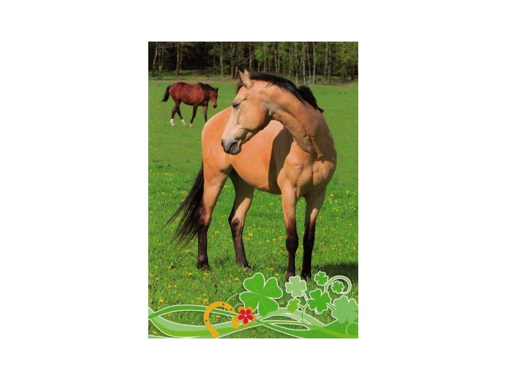 Pohlednice Koně 60