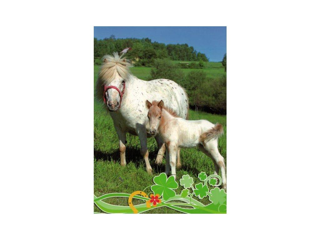 Pohlednice Koně 61