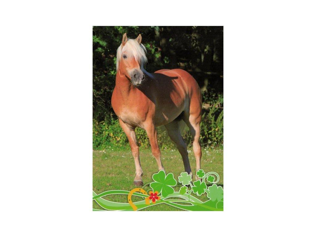 Pohlednice Kůň 62