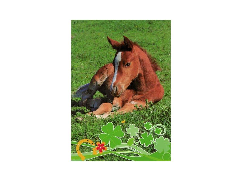 Pohlednice Kůň 64