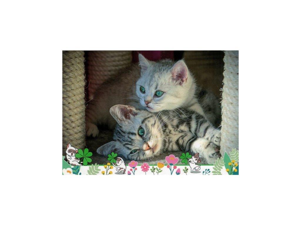 Pohlednice Kočky 83