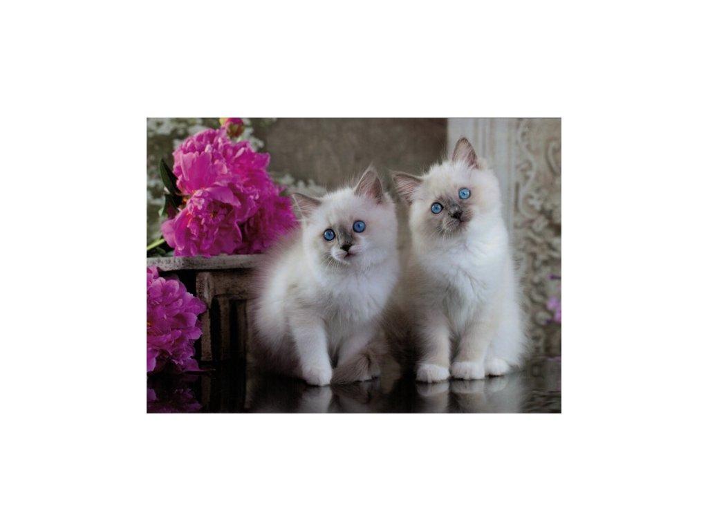 Pohlednice Kočky 84