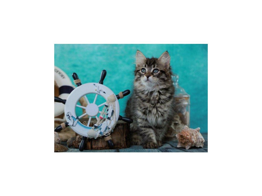 Pohlednice Kočka 88