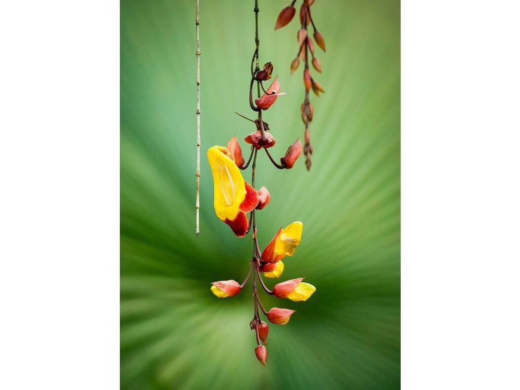 Pohlednice Jaro v tropech