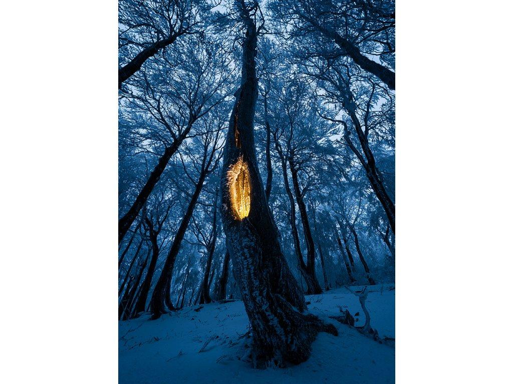 Pohlednice Tajemství lesa