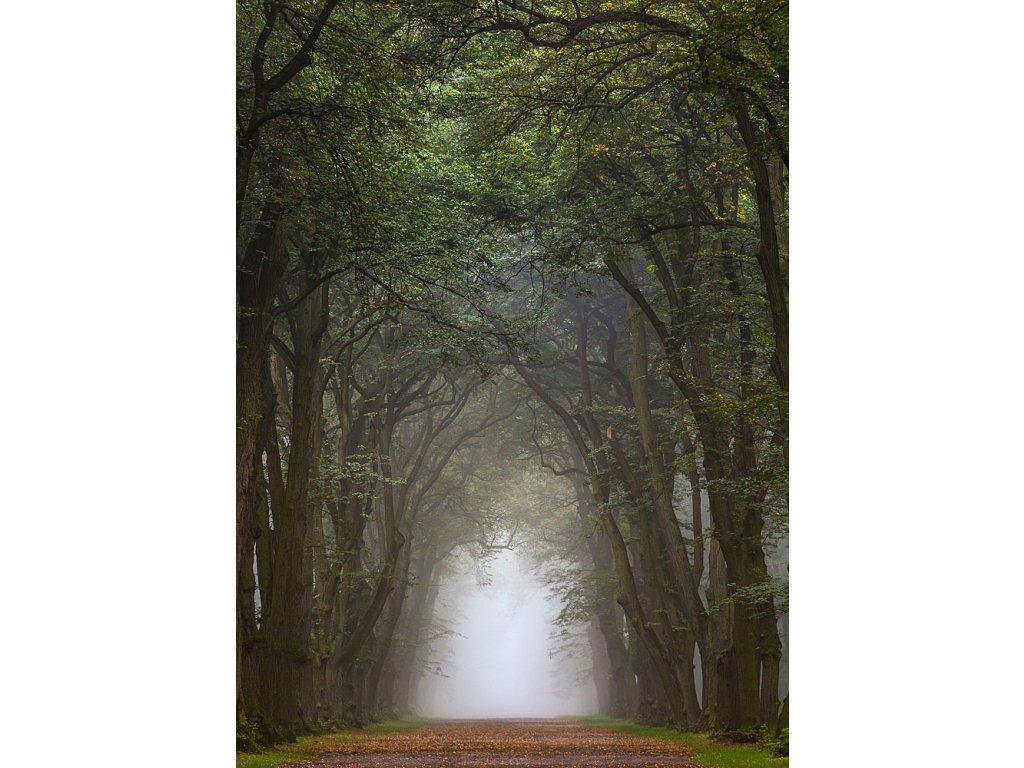 Pohlednice Elfí les