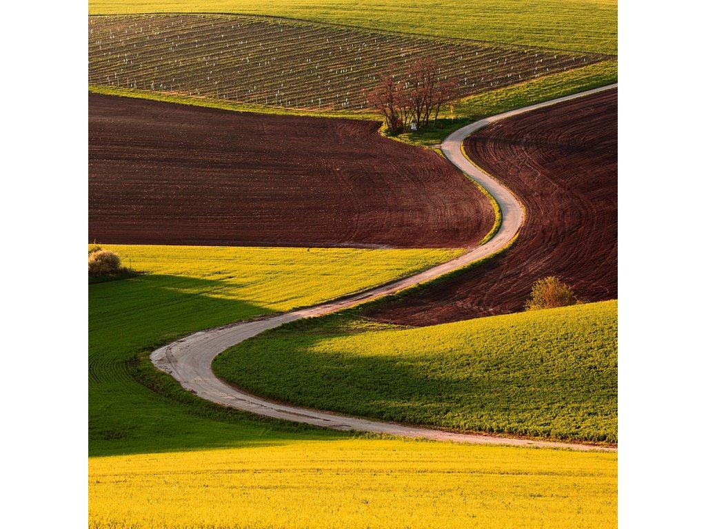Pohlednice Polní cesta