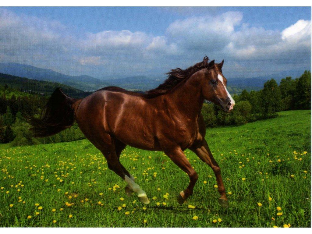 Pohlednice kůň 4
