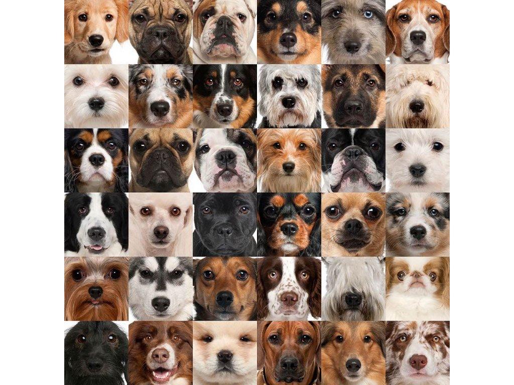 Pohlednice psi