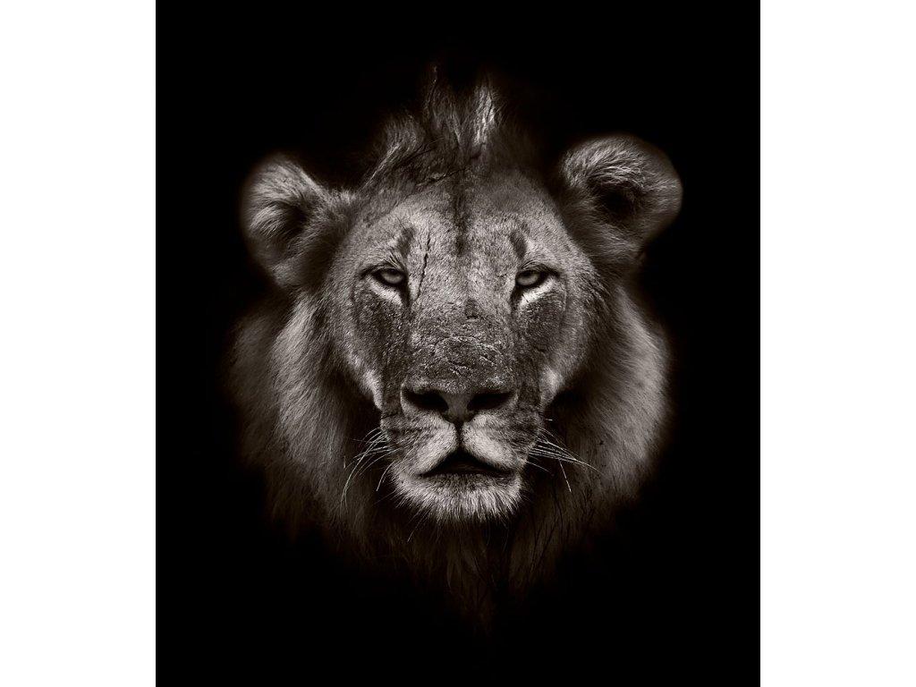 Pohlednice lev