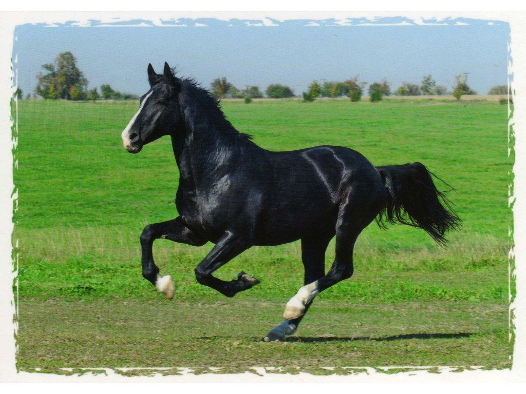 Pohlednice kůň 11