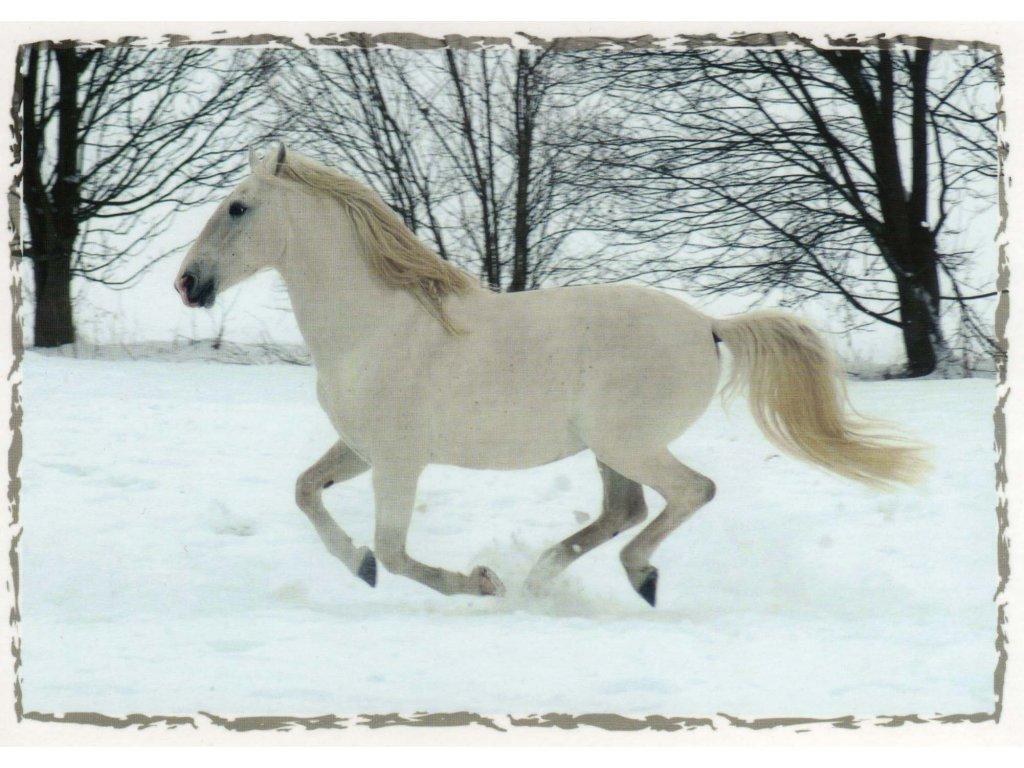 Pohlednice kůň 12