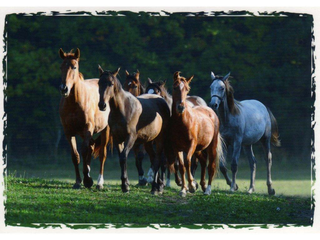 Pohlednice koně 7