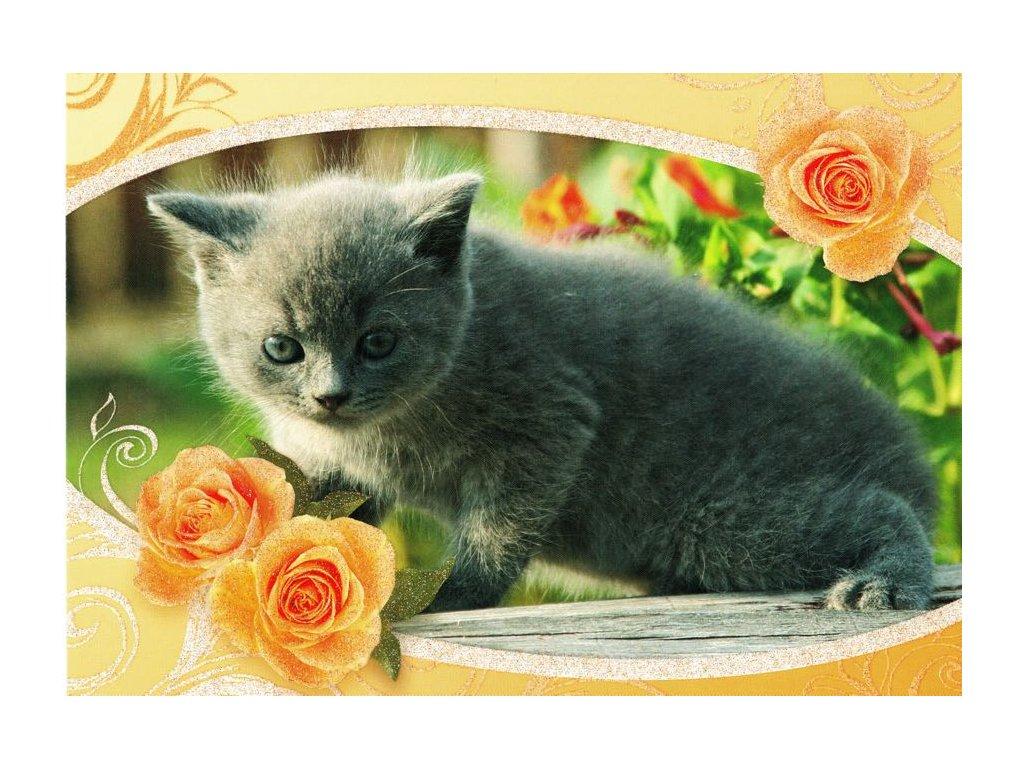 Pohlednice Kočka 13 (třpyt)