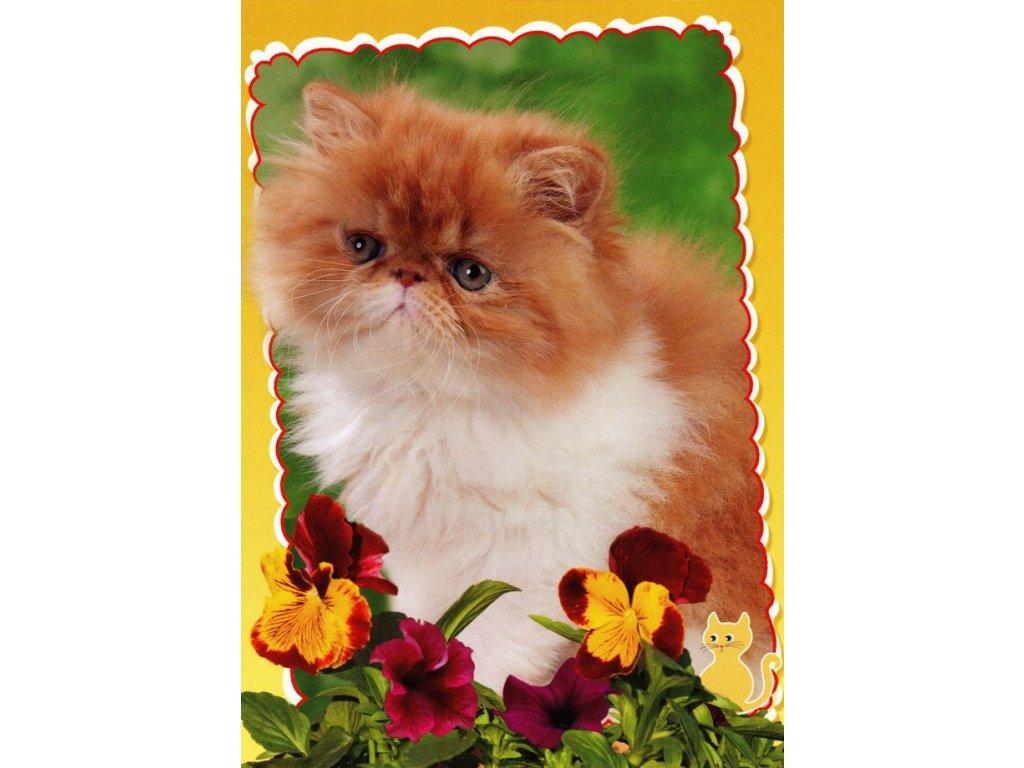 Pohlednice kočka 18