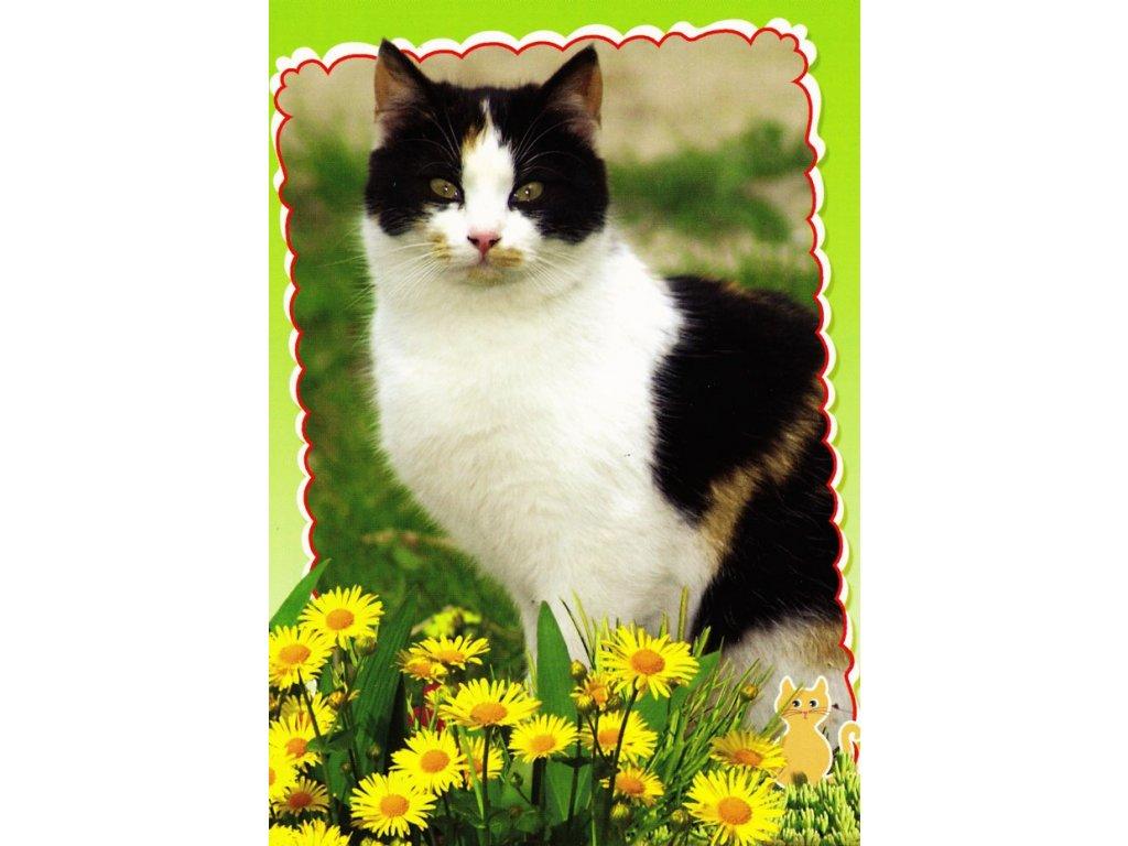 Pohlednice kočka 19
