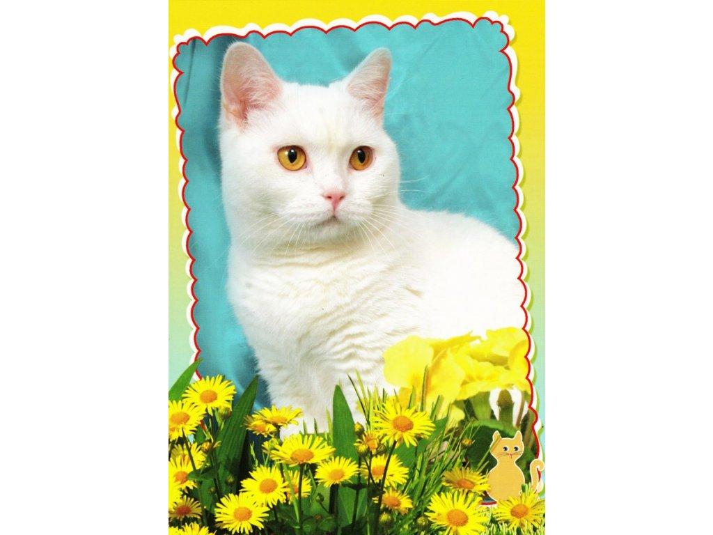 Pohlednice kočka 20