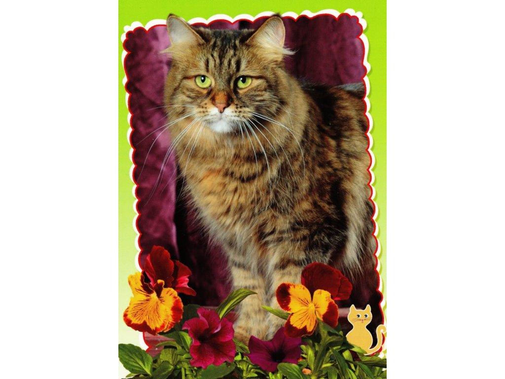 Pohlednice kočka 22