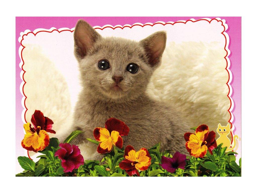 Pohlednice kočka 23