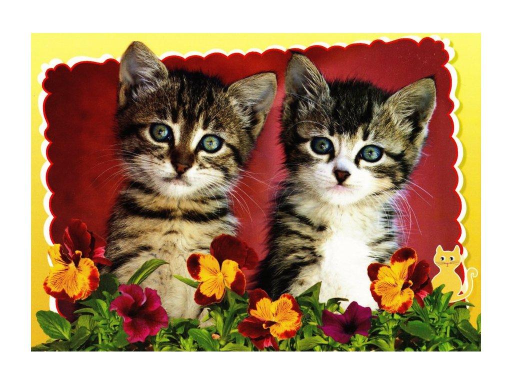 Pohlednice kočky 24