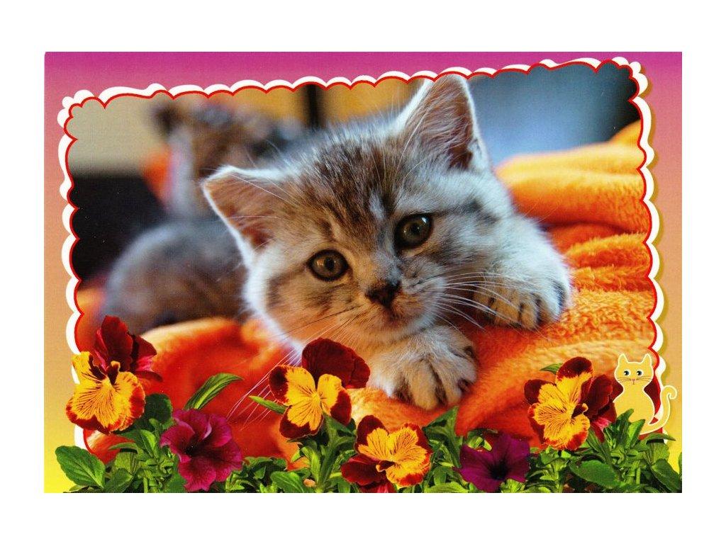 Pohlednice kočka 25